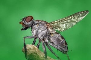 image of housefly on green background