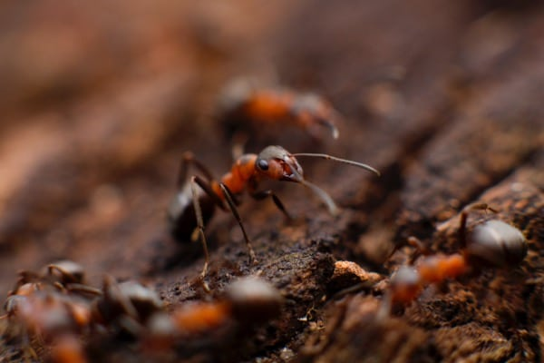 5 Ways to Keep Pests at Bay in Spring and Summer