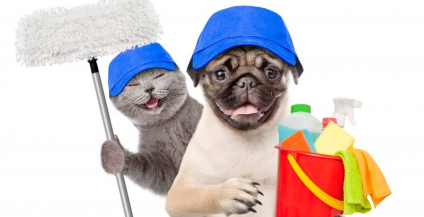 Cleaning concept. Cat and dog in blue hats holds bucket with washing fluids and mop in paw. isolated on white background.
