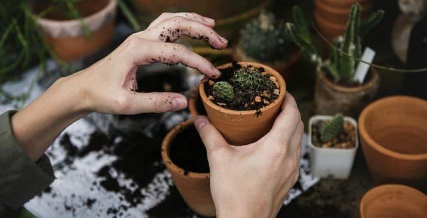Inspiration for Office Garden